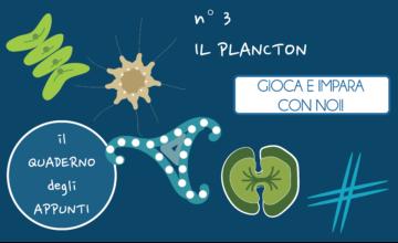 Il quaderno degli appunti 3 – il plancton